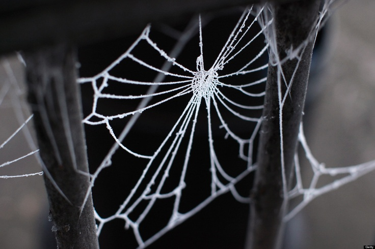HUNTINGDON, ENGLAND - FEBRUARY 11: A spider's web is covered in frost in sub-zero temperatures on February 11, 2012 in Huntingdon, England.