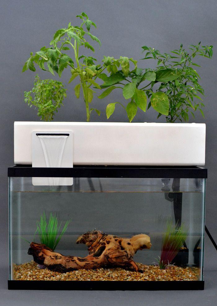 56 best mini aquaponics images on pinterest urban for Aquaponics aquarium