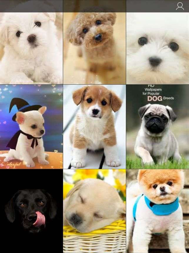 Baby Dogs Wallpaper Awesome Puppy Wallpaper Android Cute Puppy Aestheticbackground 89 Background Blogerzi Com P In 2020 Puppy Wallpaper Cute Baby Puppies Baby Puppies