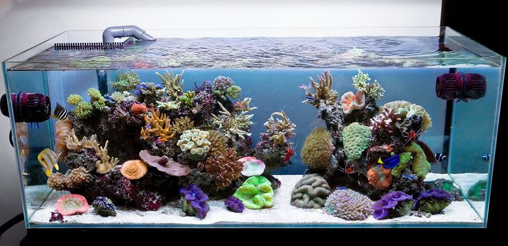 Aquarium Design Group - Aqua Design Amano 120-P Overflow model Open Top Reef Aquarium #aquarium