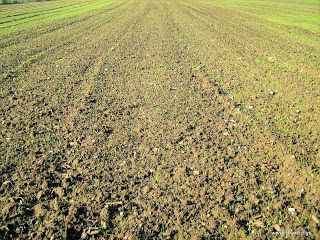 Θερμοκρασία και βλάστηση σιτηρών δημητριακών οσπρίων