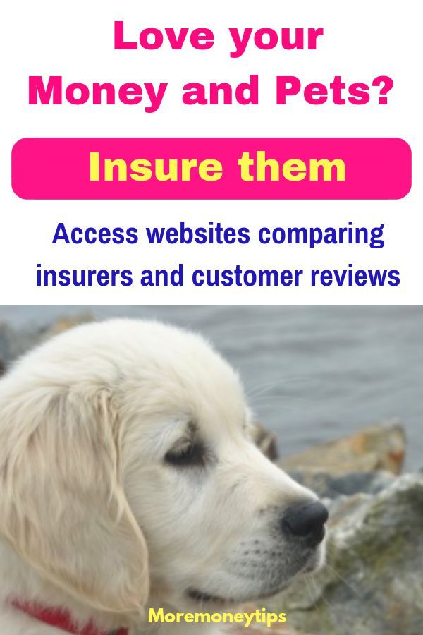 Pet Insurance Best Ways To Save More Money Tips Finance Advice How To Get Money Best Money Saving Tips