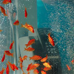 Public Phone Booths Transformed Into Giant Fish Aquariums - I would LOVE to talk on the phone in one of these!