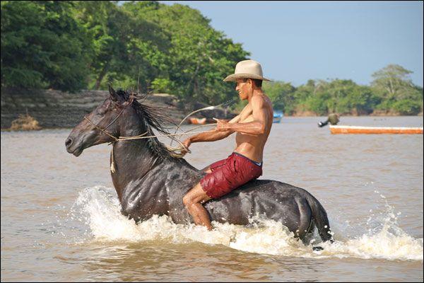 caballo llanero - Buscar con Google