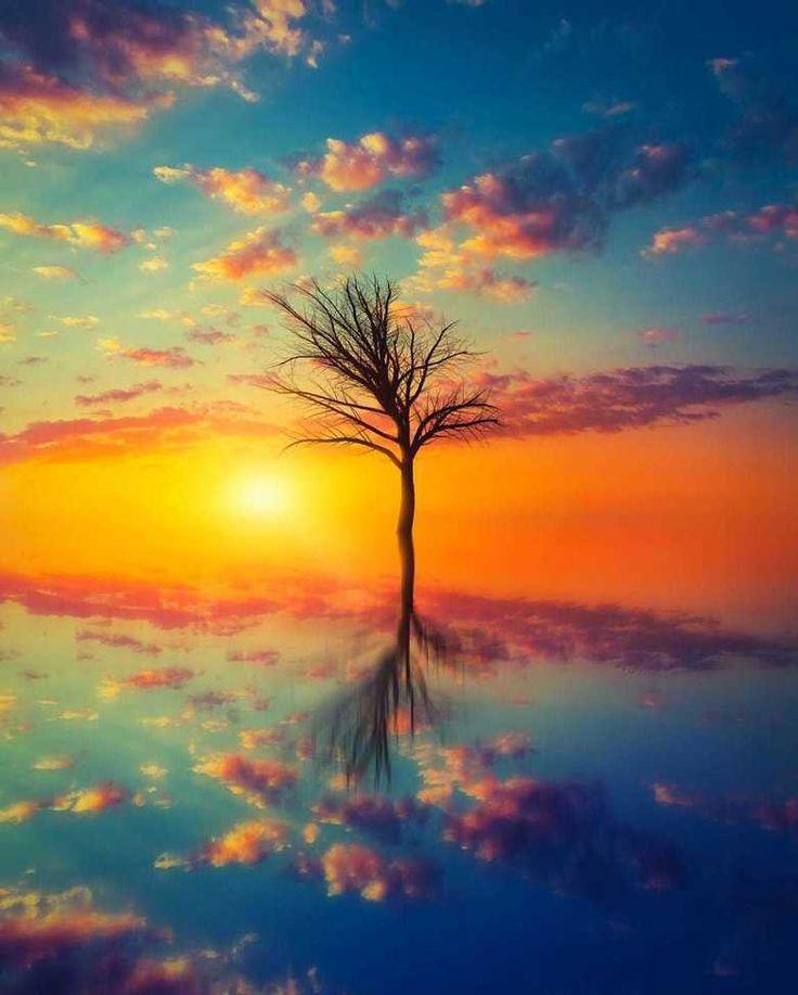Cada cosa tiene su belleza pero no todos pueden verla (Confucio) Fot.: Stijn Dijkstra #arbol #tree #amanecer #sunrise #agua #water #silueta #silhouette