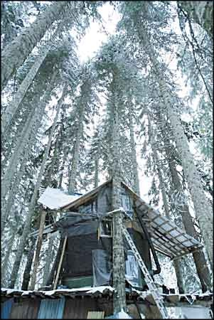 .: Ski Community, Favorite Places, Trees House, Soul Restoration