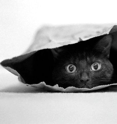 """""""A black cat crossing your path signifies that the animal is going somewhere."""" ~ Groucho"""