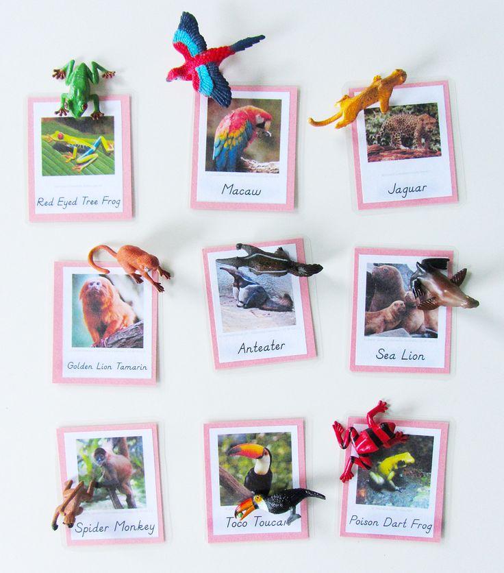 Montessori Classroom Wall Design ~ Animals of south america for the montessori wall map