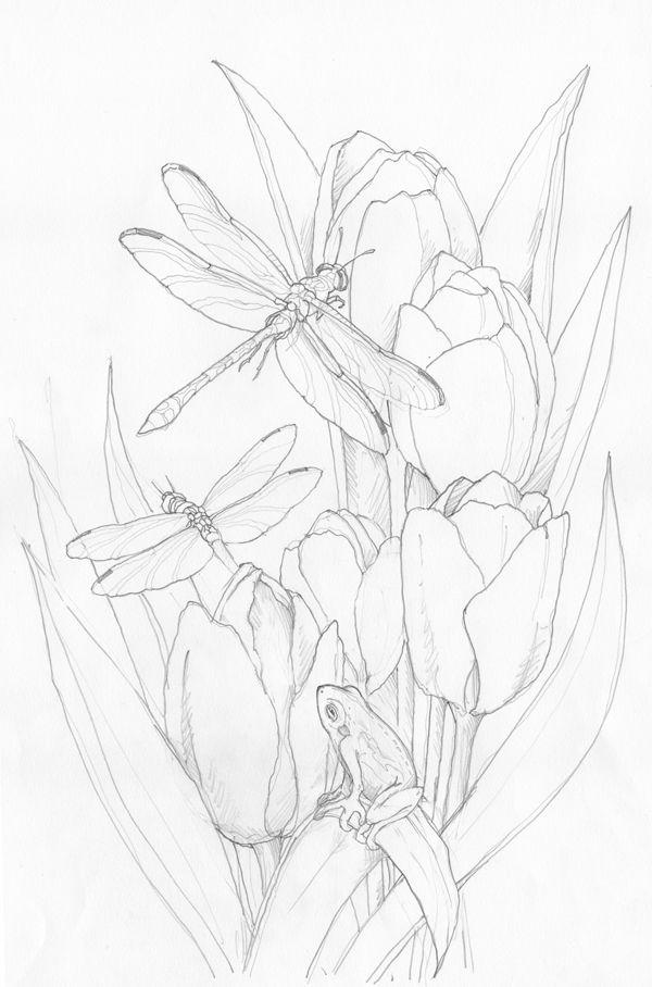 Bergsma Gallery Press :: Paintings :: Originals :: Original Sketches :: 2014/Tulips/Dragonflies/Frog - Original Sketch