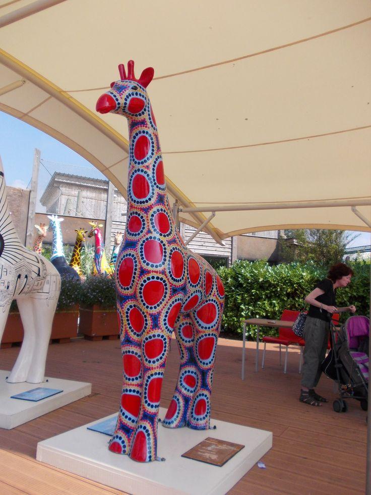 Colchester Zoo giraffe