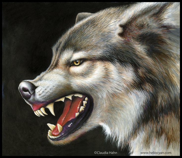 Amazing Wolf: Evil Smiles Of Beauty By Heliocyan On DeviantArt