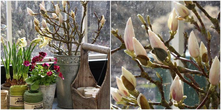 DRIV GRENE TIL UDSPRING INDENDØRE - Springflowers indoor