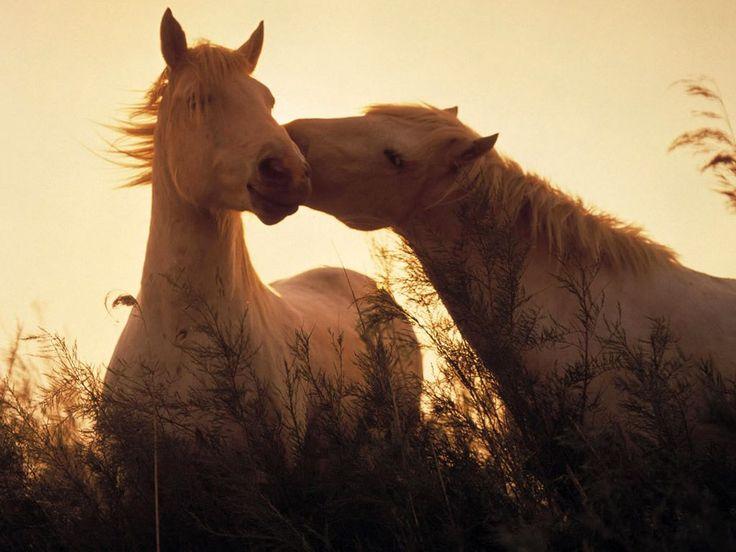 Valle dell'Aveto: i cavalli selvatici in un concorso fotografico #consigli #natura #liguria