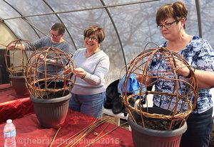 Living Willow Sphere - Spring Workshops at The Branch Ranch and Warkworth Willow Works in Ontario, Canada