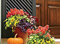 Best Ideas for Fall Container Gardening