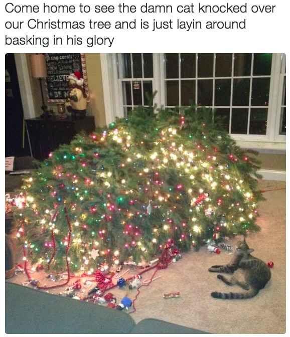 Você poderia passar horas decorando sua árvore de Natal, mas aí o maldito do seu gato vai derrubá-la.