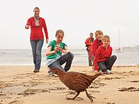 Look out for weka on Ulva Island (Stewart Island, New Zealand)