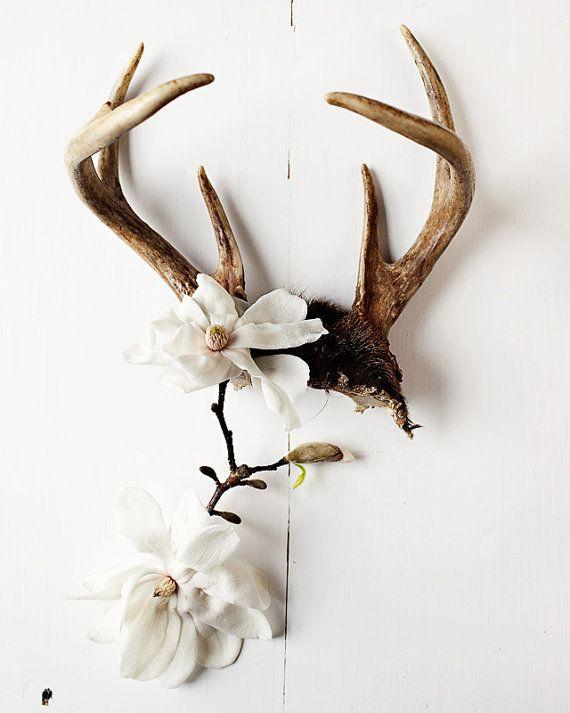 deer antlers, flowers, interiors, skull, bones