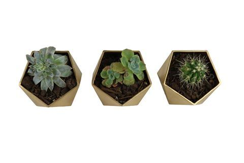 Such a sucker for succulents.  Beautiful 3D printed geo trio from Yeah Nah