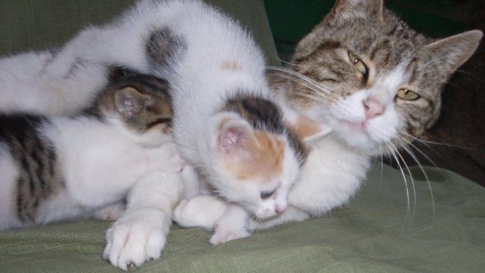 hembras mamíferas cuidados del recién nacido http://madresnaturales.com/articulos/hembras-mamiferascuidados-del-recien-nacido#