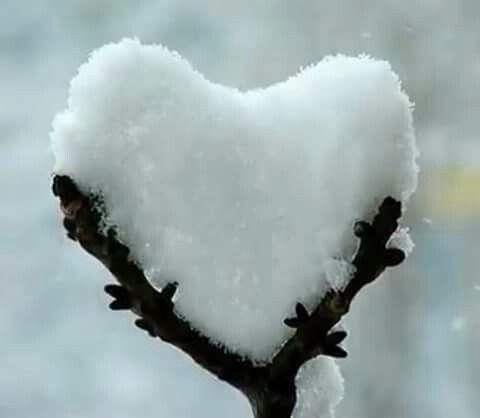 Snowheart                                                                                                                                                                                 More