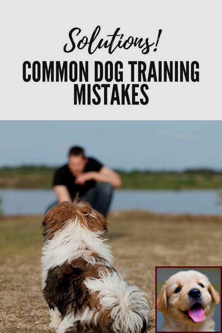 1 Have Dog Behavior Problems Learn About Dog Behavior Research