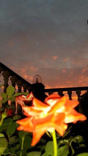 Sunset#rose#monsoon#rehaish#panchgani
