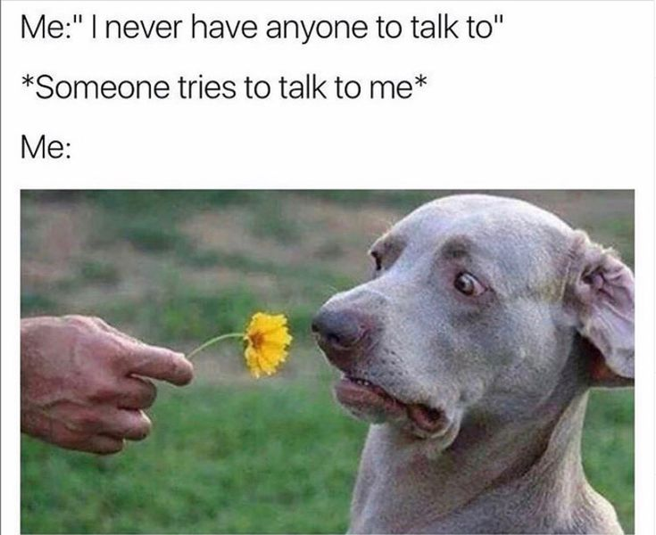 lmaoo introvert issues 😭