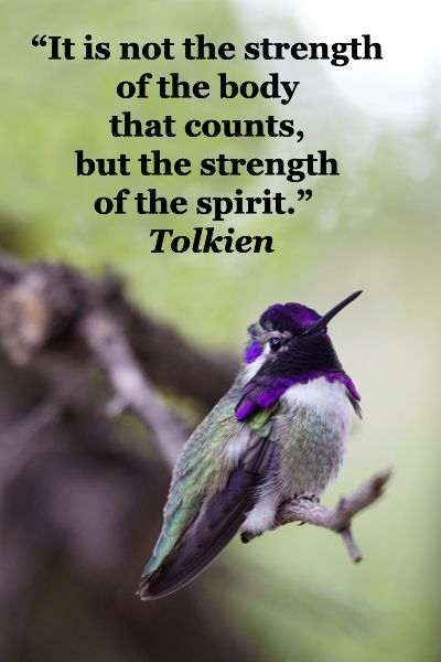 """It is not the strength of the body that counts, but the strength of the spirit.""  Tolkien  -- On image of HUMMINGBIRD IN TUCSON, ARIZONA -- Explore quotes on discovering the sacred in life at http://www.examiner.com/article/learning-to-find-the-sacred-life"