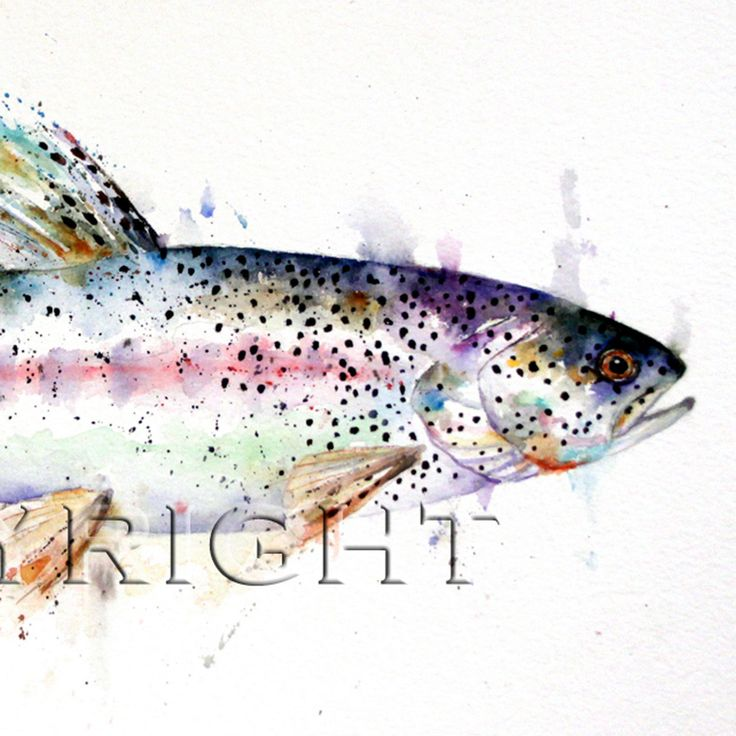10 best images about rainbow trout fishing on pinterest | fish, Fly Fishing Bait