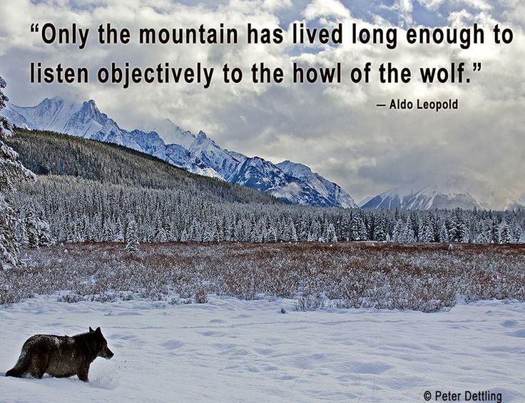 Image result for aldo leopold quotes