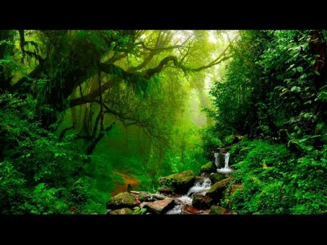 Isochronic Tones Binaural Beats And Self Hypnosis Forest Sounds Nature Sounds Nature Meditation