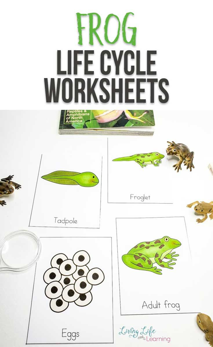 Frog Life Cycle Worksheets Lifecycle Of A Frog Frog Life Life Cycles
