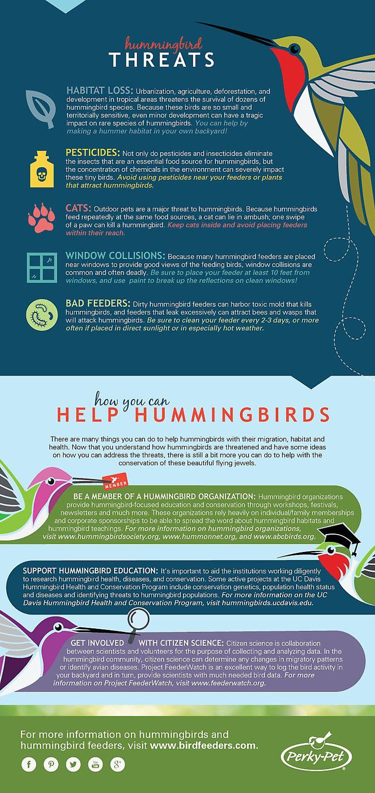 best 25 hummingbird migration ideas on pinterest attracting