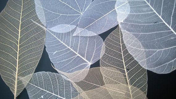 季節によって木々の表情も変わりますが、植物や樹木の葉を使ったスケルトンリーフは独特の風合いとナチュラルな仕上がりになります。葉の種類によってさまざまなできばえを楽しむこともできるスケルトンリーフ。素材も植物の葉なので、アートや雑貨に活用してナチュラルDIYを楽しんでみませんか?