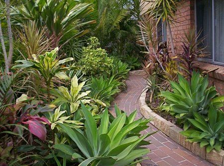 Best 25 small tropical gardens ideas on pinterest for Low maintenance tropical landscaping