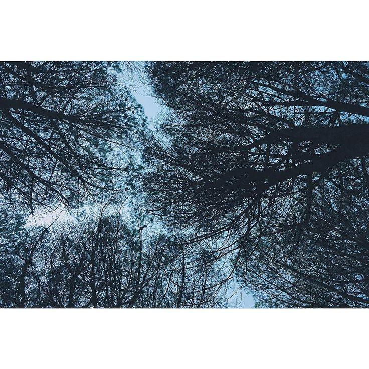 {323-THE REVENANT 2015} As long as you can still grab a breath, you fight. You breathe. Keep breathing. When there is a storm and you stand in front of a tree, if you look at its branches, you swear it will fall. But if you watch the trunk, you will see its stability. Finché avrai ancora un respiro, combatti. Tu respiri. Continua arespirare. Nel mezzo di unatempesta, se guardi i rami di un'albero, giureresti che stia per cadere. Ma se guardi il suo tronco ti accorgerai ti quanto sia…
