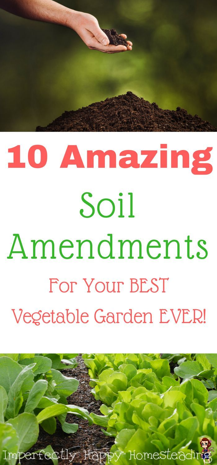 10 Amazing Soil Amendments for the BEST Vegetable Garden EVER. Organic gardening at its best!