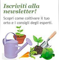 | InOrto - Guida all'orto fai-da-te. Istruzioni e consigli per coltivare le tue verdure