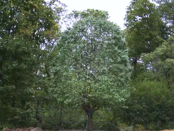 The True Story of the Tree That Survived 9/11 (VIDEO) http://www.people.com/article/9/11-survivor-tree