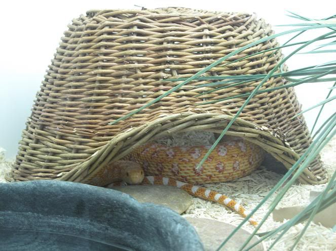 Basket Snake Hide - petdiys.com