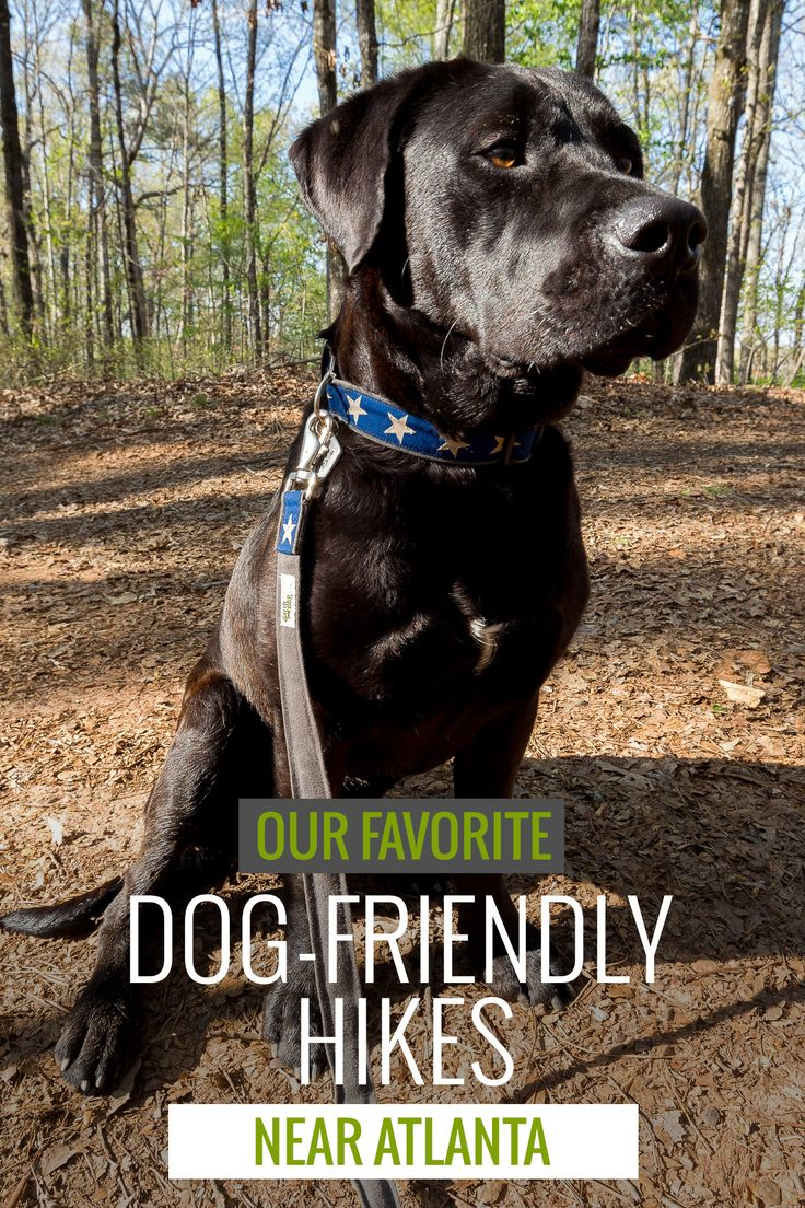 Atlanta's best dog-friendly trails: our top 10 favorite dog-friendly hikes