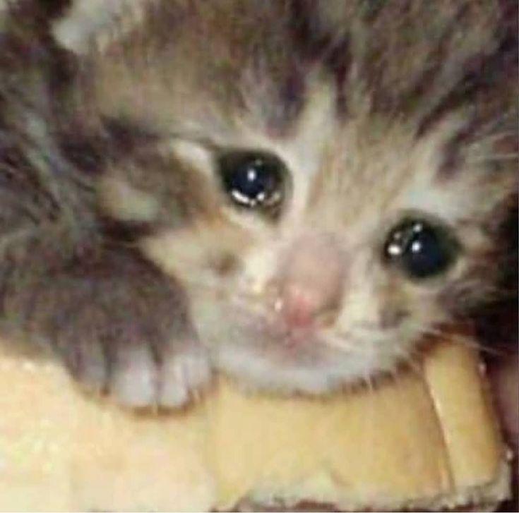 hes a sad bean Follow for similar content c: • #cat #cats #catmemes #catmeme #…