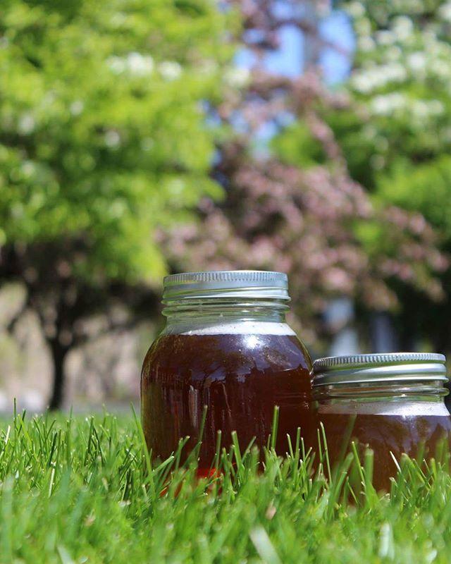 Found some kombucha out in the wild  #weinthisbooch#kombucha #kombuchatea#vegan#whatvegansdrink #veganfoodshare#healthfood#homebrew #guthealth#wholefoods#plantbased#scoby#diy #detox#fermentation#vegansofig#fitness#health #tea#farmtotable#probiotic#eats#bestofvegan #smallbatch#brew#summer#outdoors…