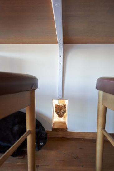 猫と暮らす和の家~和美庵~ (ポウハウス(POHAUS))|和テイストを取り入れた家_カテゴリー|建築実例|埼玉・千葉・東京の注文住宅・建て替えならポラス(POLUS)の注文住宅