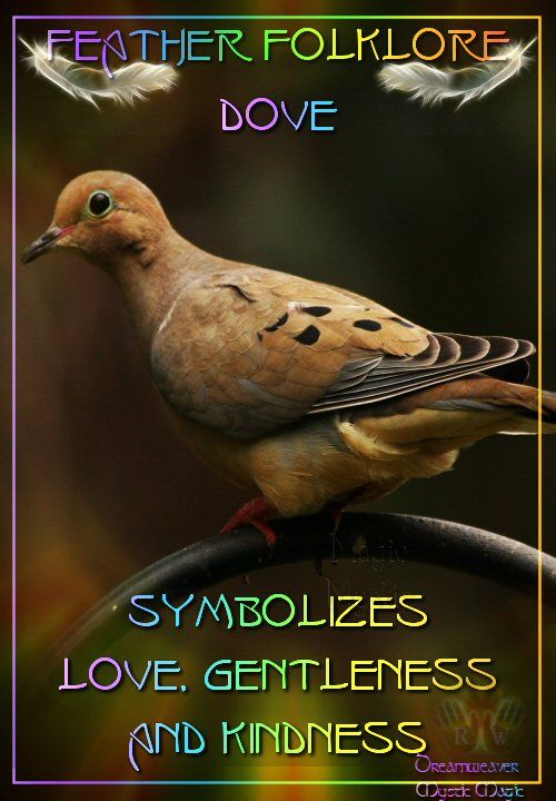 Dove - symbolizes love, gentleness and kindness by Dreamweaver #Shamanism #Paganism