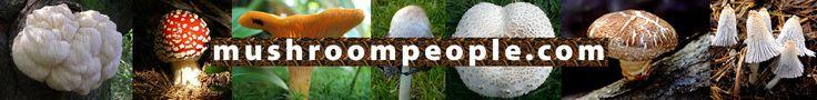 Mushroompeople- located in Summertown....grow-your-own mushrooms