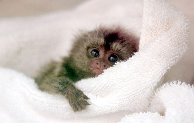 animaux trop mignons | Photo 20 - Les bébés animaux trop mignons