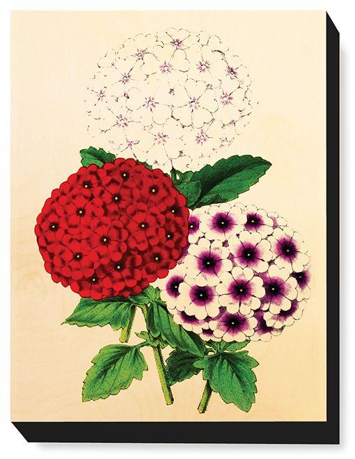 FLW 027 Vintage Flower illustration