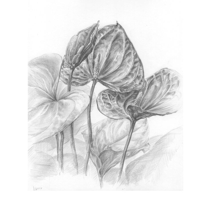 Pencil drowing. Flowers
